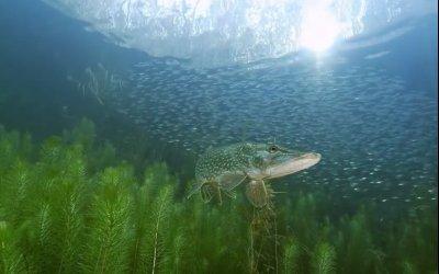 Le fleuve invisible - Un trésor sous la plaine du Rhin